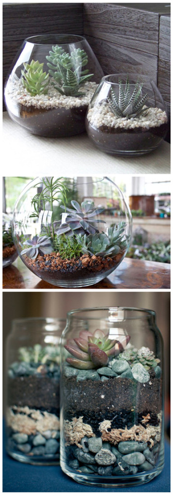Cool terrariums for your home