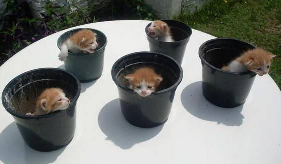 how_to_grow_cats06