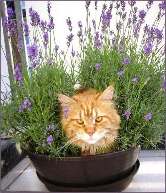 how_to_grow_cats10