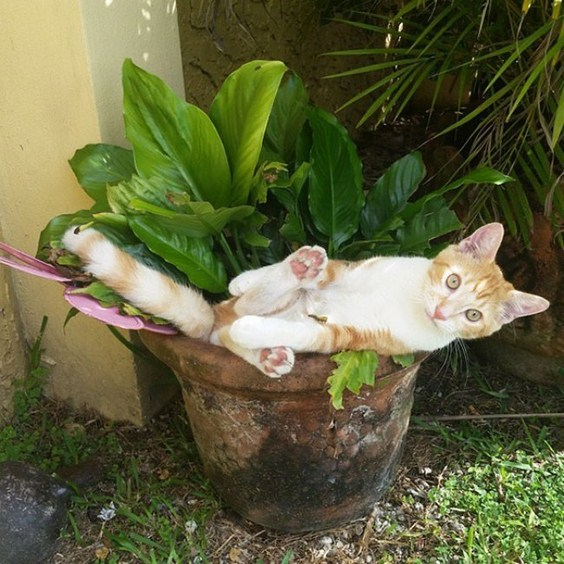 how_to_grow_cats11