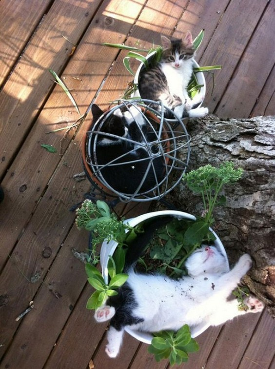 how_to_grow_cats17