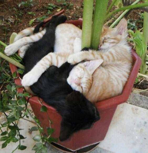 how_to_grow_cats19