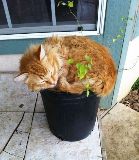 how_to_grow_cats21